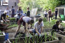 Un jardin d'agriculture urbaine