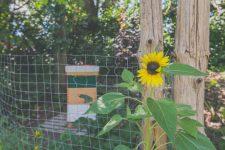 Biodiversité et pollinisateurs - Circuits Jardins