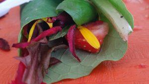 Goût des récoltes - Potager des jeunes Centre-Sud