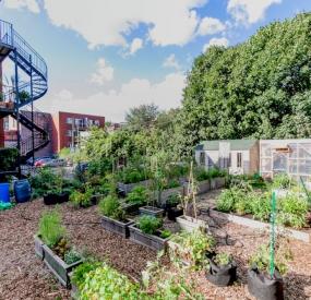Jardin agriculture urbaine